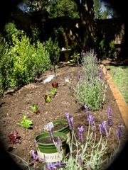Vege_garden